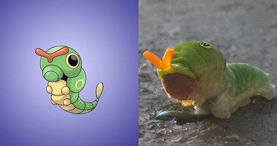 caterpie - Seputar Pokemon